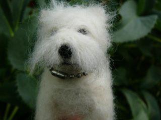 droog gevilt, West-Highland Terrier