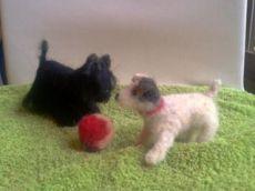 droog gevilt, Jack Russel en Scottish Terrier