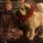 droog gevilt, Tibetaanse Mastiff